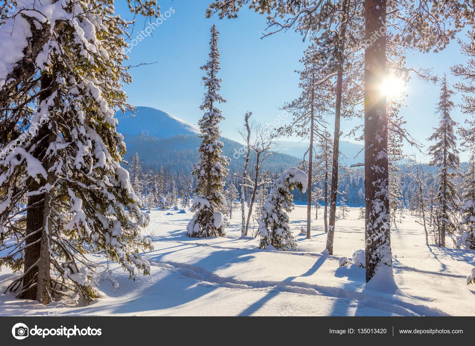 Fondos de pantalla de invierno sin nieve