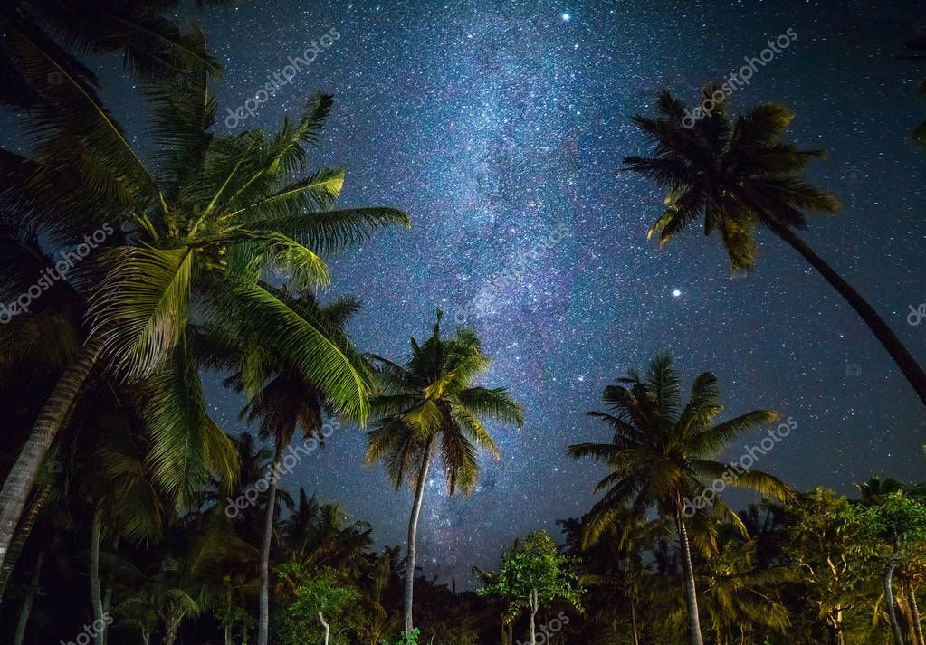 Night shot with palm trees and milky way in background