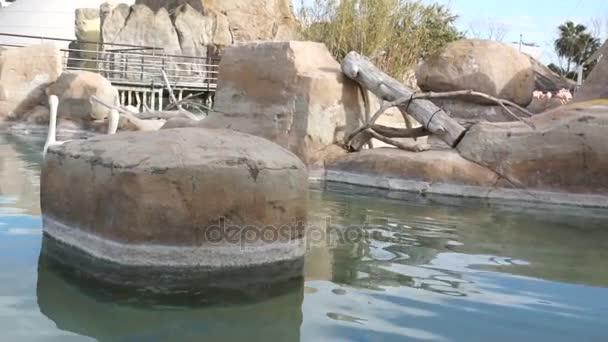 Große Wasservögel putzen Federn im Naturteichpark