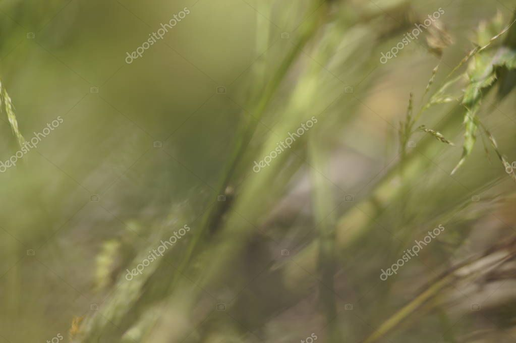 Green blurred background of grass, spikes and flowers on a Sunny day. Bright sun pattern