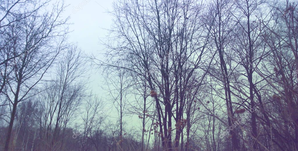 Bare trees against the sky