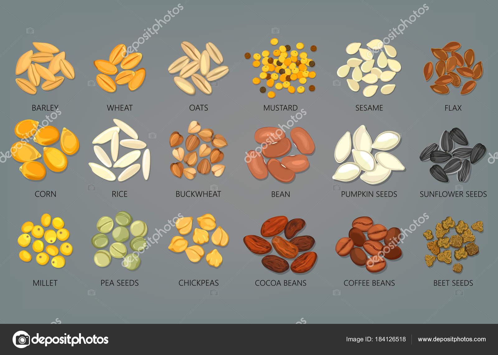 Alimento Semillas Y Granos
