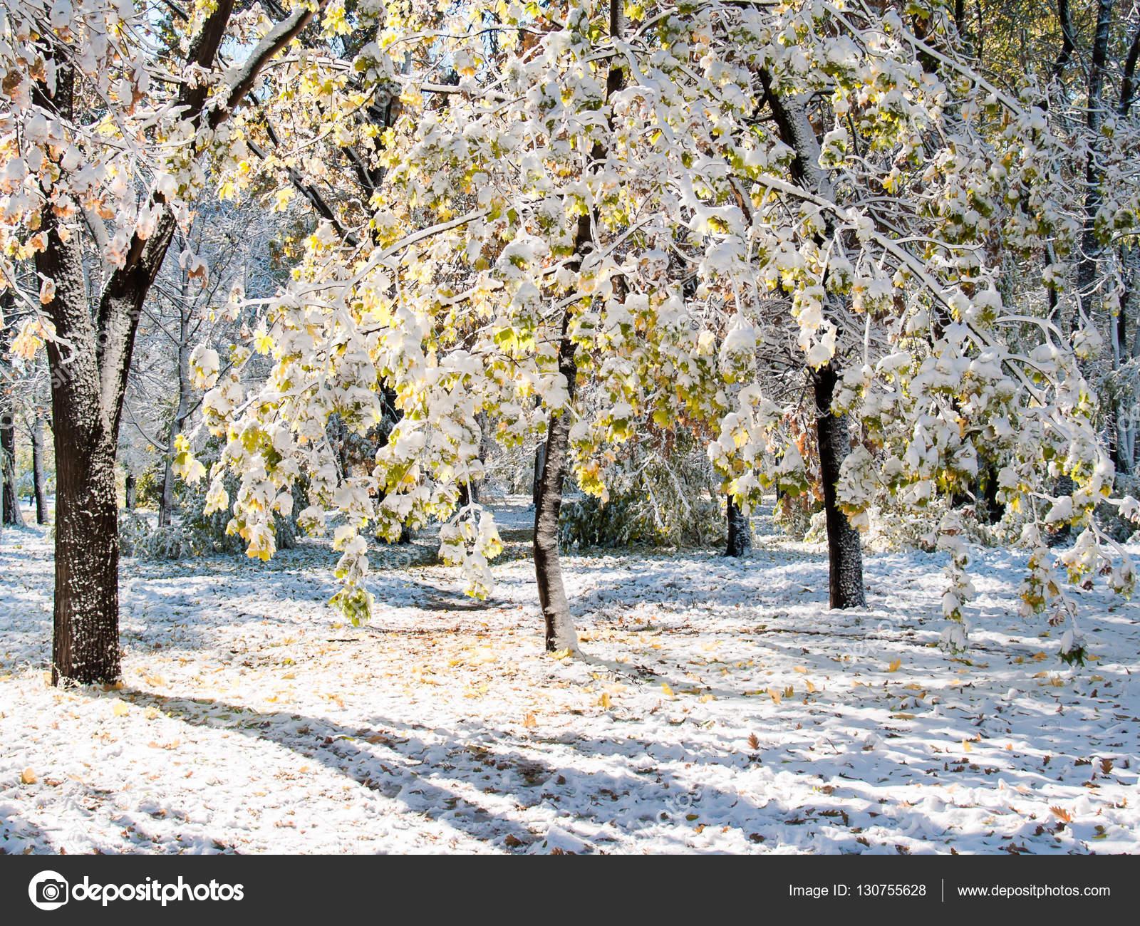 Sol de invierno en los árboles con hojas de color verde cubierto de ...