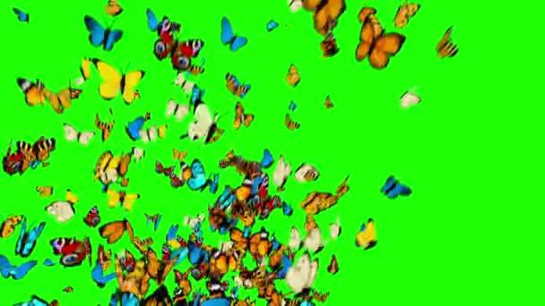 Motýly létání na zeleném pozadí. Animace 3D, 4k