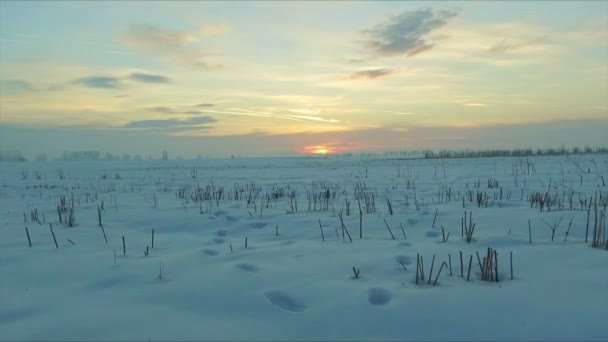 At sunset flying over a field of snow with human and animal traces in the countryside. Extremely low flight. Drone used, 30fps