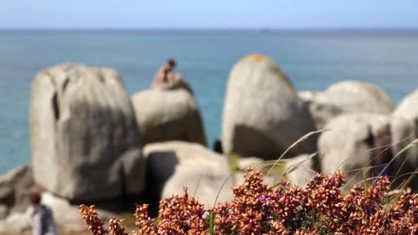 A boy is seated on a big rock above the sea. Some walkers pass by on a footpath along the shore. Red heather in flower in foreground is agitated by the wind. People are out of focus.