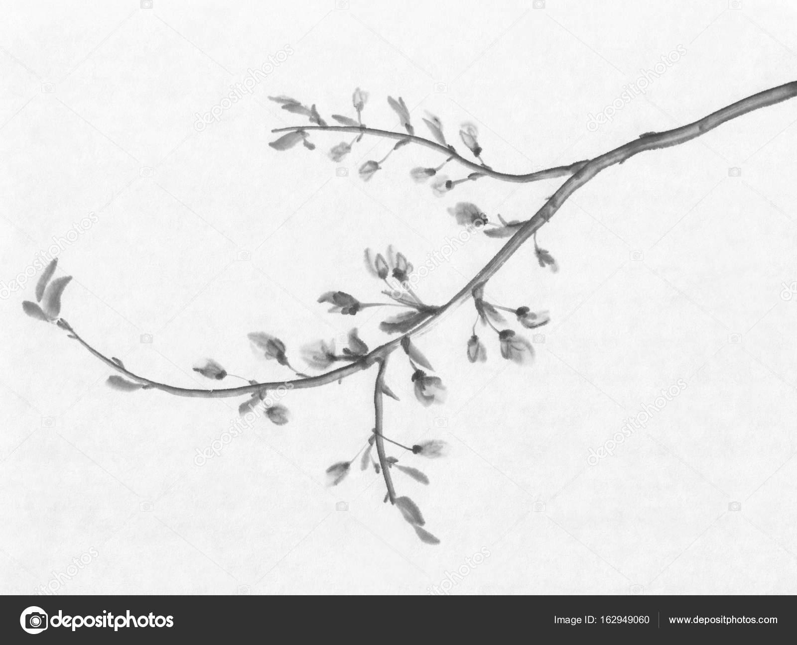 Kiraz Ağacı çiçekli Mürekkep Boyama Stok Foto Eglelip 162949060