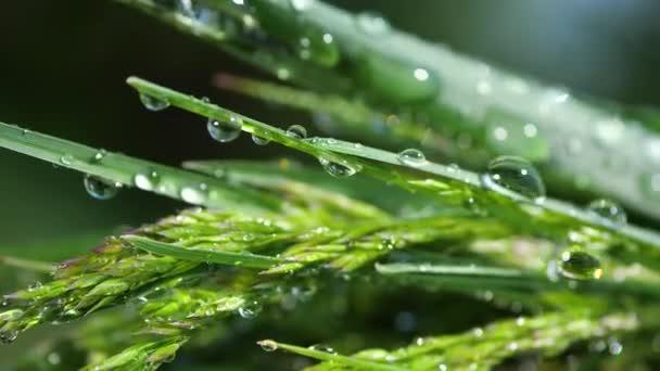 Zelená tráva v přírodě s kapkami deště