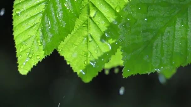 grünes Blatt mit Tautropfen