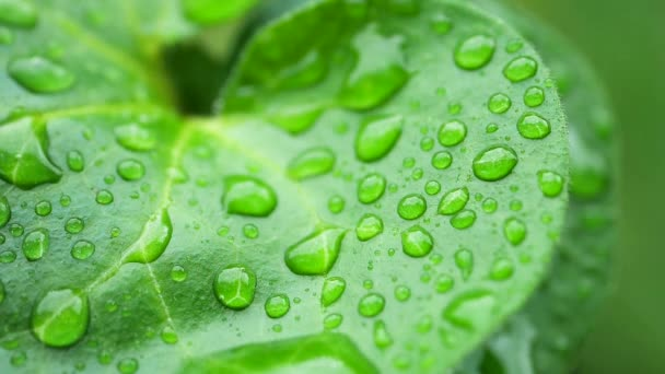 Green leaf with dew drops