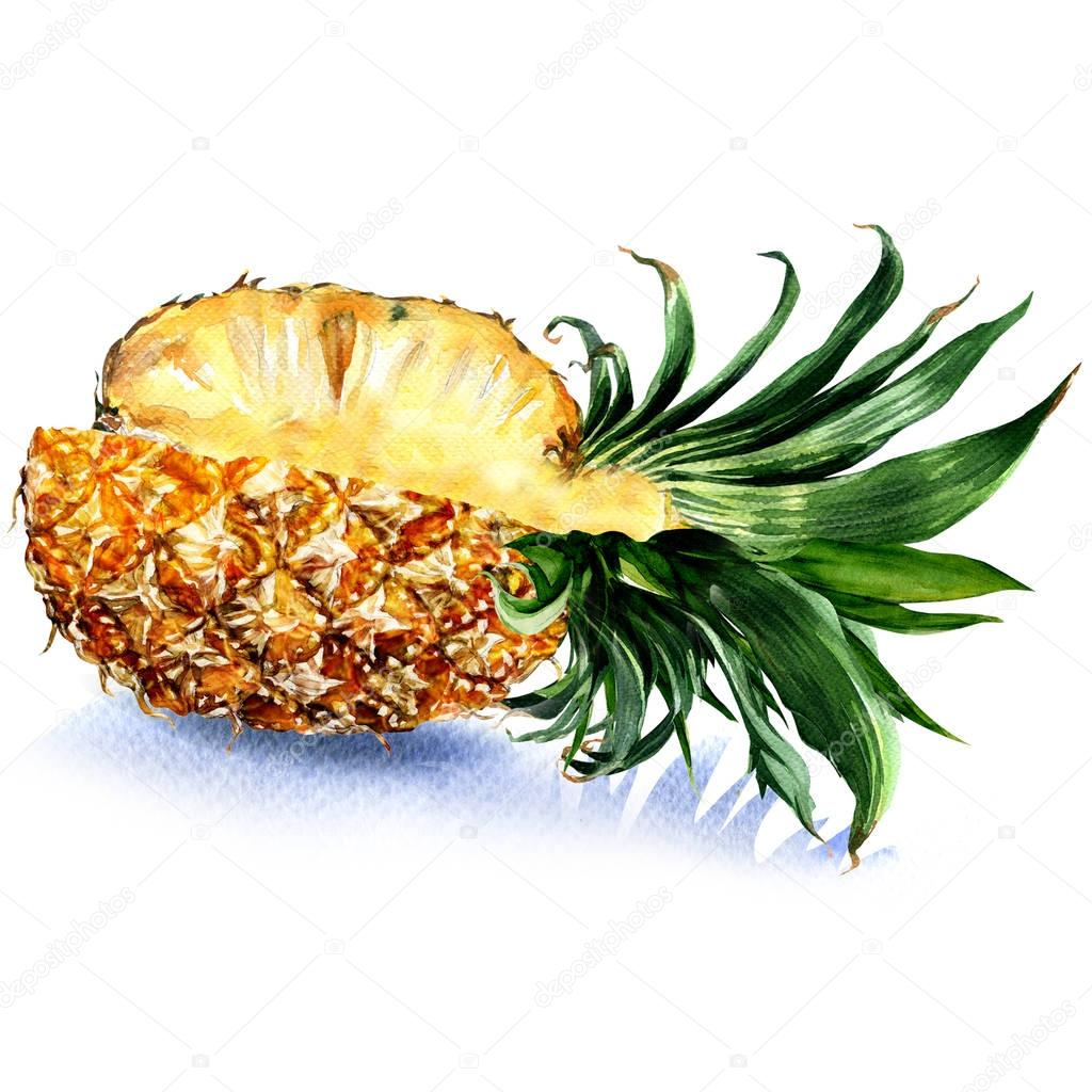 Fresh juicy sliced pineapple fruit , isolated, watercolor illustration on white