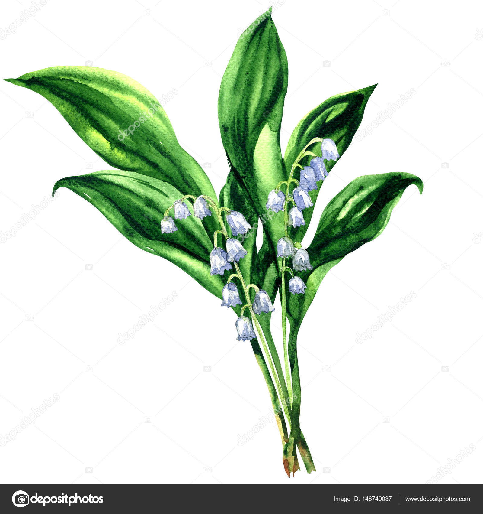 Lily of the valley bouquet of spring flowers isolated lily of the valley bouquet of spring flowers isolated watercolor illustration on izmirmasajfo