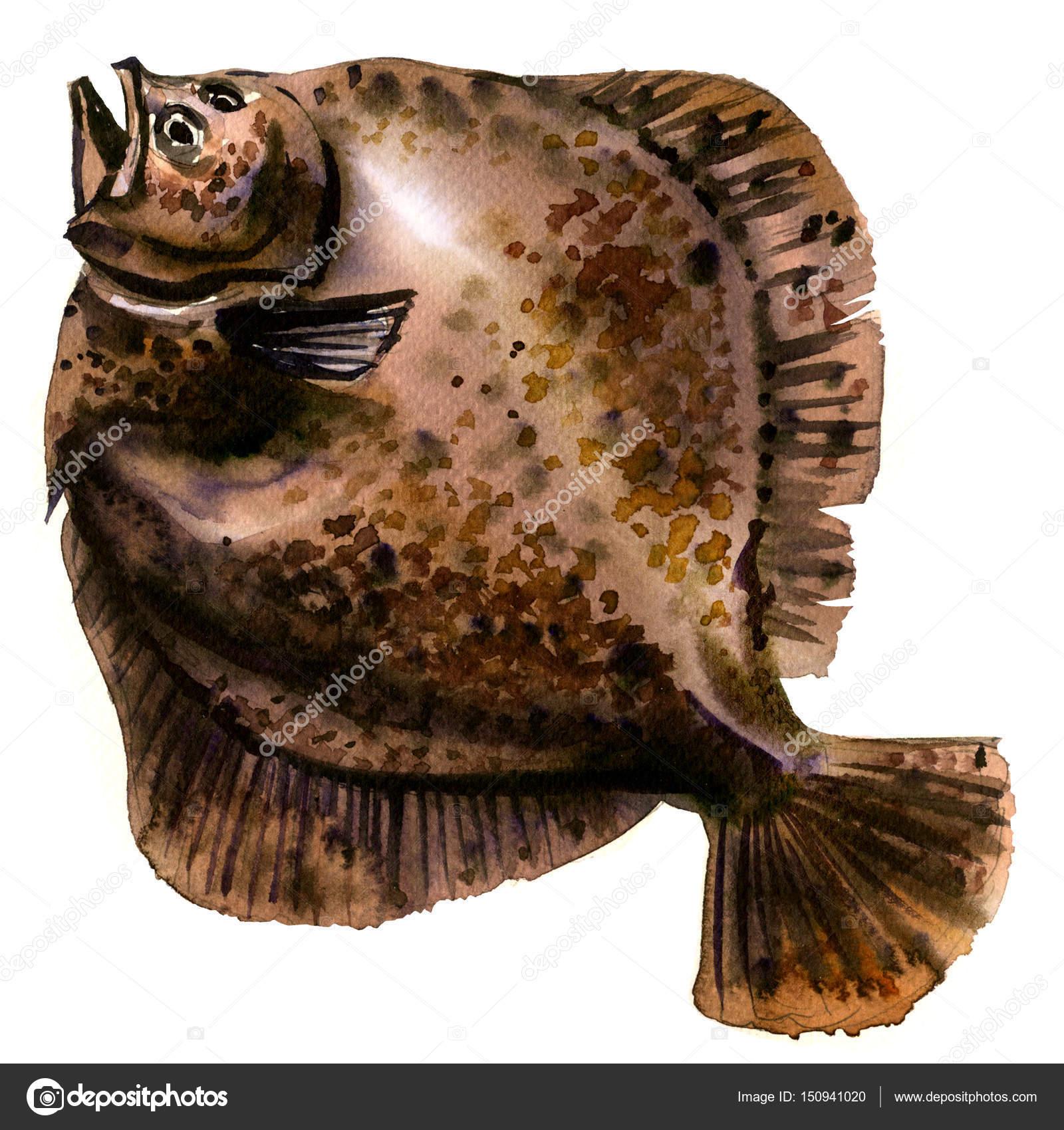 Dorar el pescado rodaballo entero crudo, platija, lenguado, lenguado ...