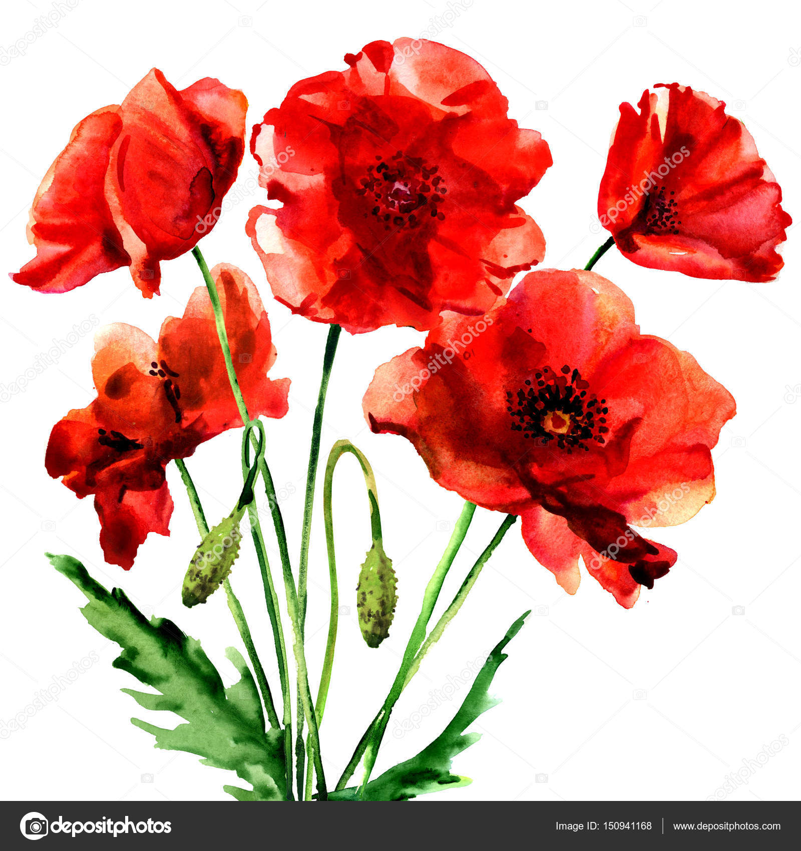 Romantic Summer Red Poppy Flower Isolated Watercolor Illustration