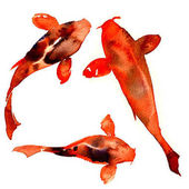 Photo Red japanese oriental koi rainbow carps, fishes isolated, watercolor illustration on white