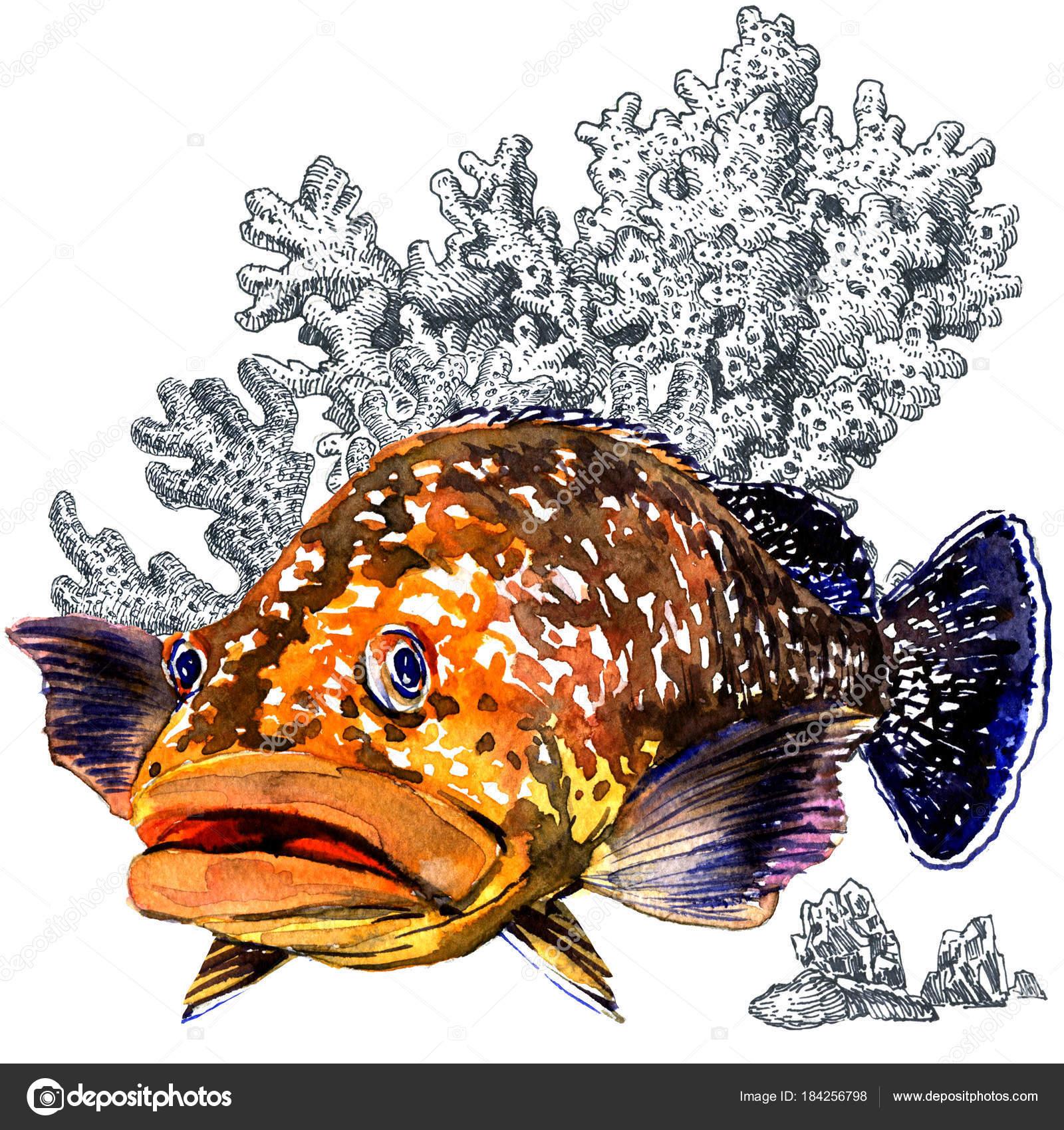 Pesce di mare fresco cernie giganti con coralli isolati for Immagini coralli marini