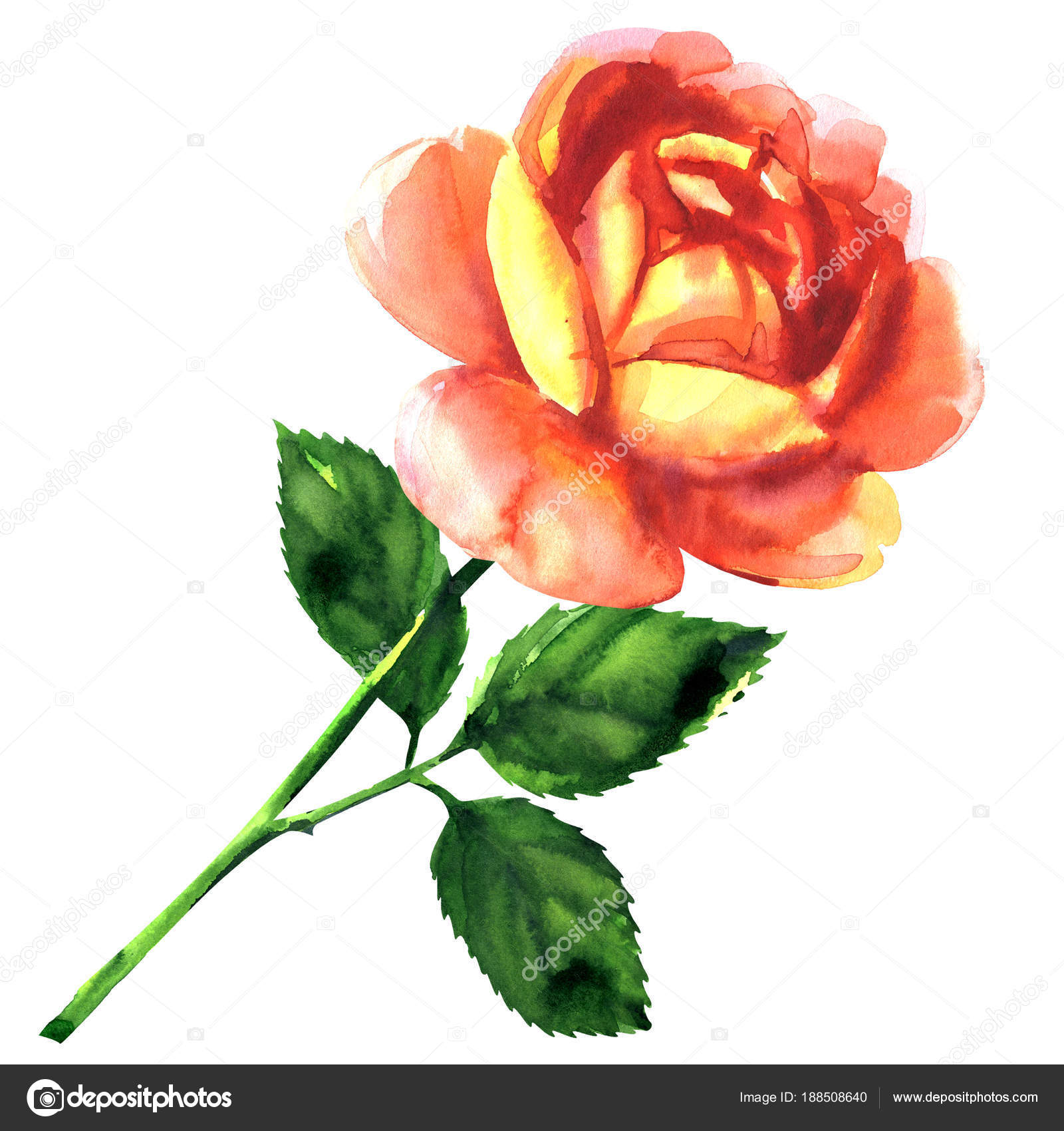 Beautiful Pink Yellow Rose Single Flower With Leaf Isolated Hand Drawn Watercolor Illustration On White Background Photo By Deslns
