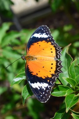 Butterfly Queen - This photo was taken at botanical garden in Illinois