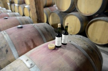 Quality control of wine at the winery Santa Rita.