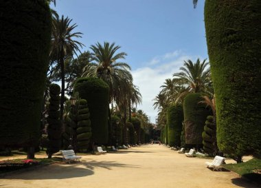 CADIZ, SPAIN - JULY 4, 2011: Parque Genoveses in the old part of the maritime city of Cadiz.