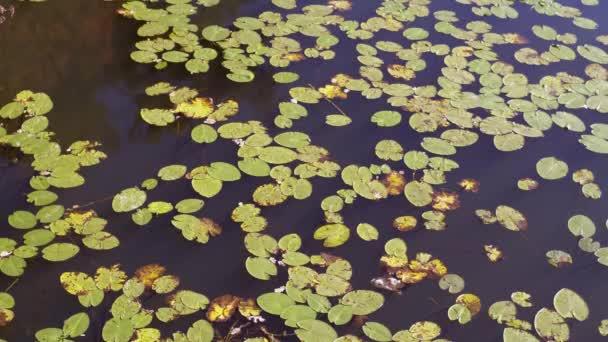 leaf litter diferent colors