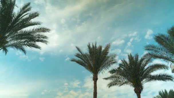 Palm Tree Sky Cloud časová prodleva