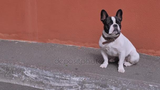 Aranyos kutya szabadban pózol.
