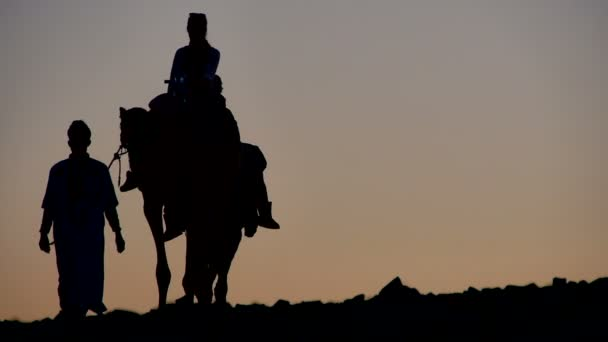Silhouettes of camels in the Sahara desert