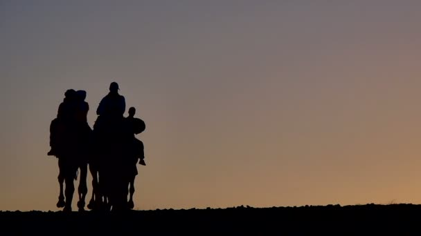 Silhouettes of tourist with camels in the Sahara