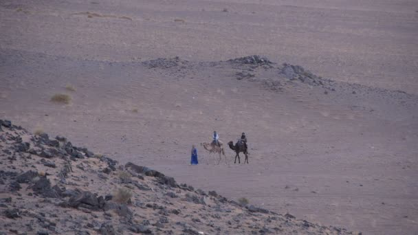 Tourists ride camels in the Sahara