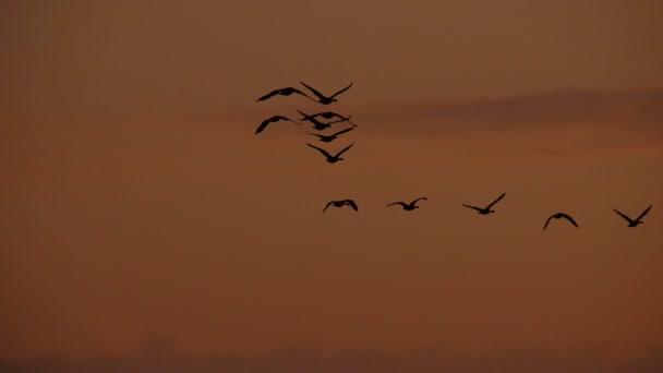 Gänsefliege bei Sonnenuntergang in Kanada