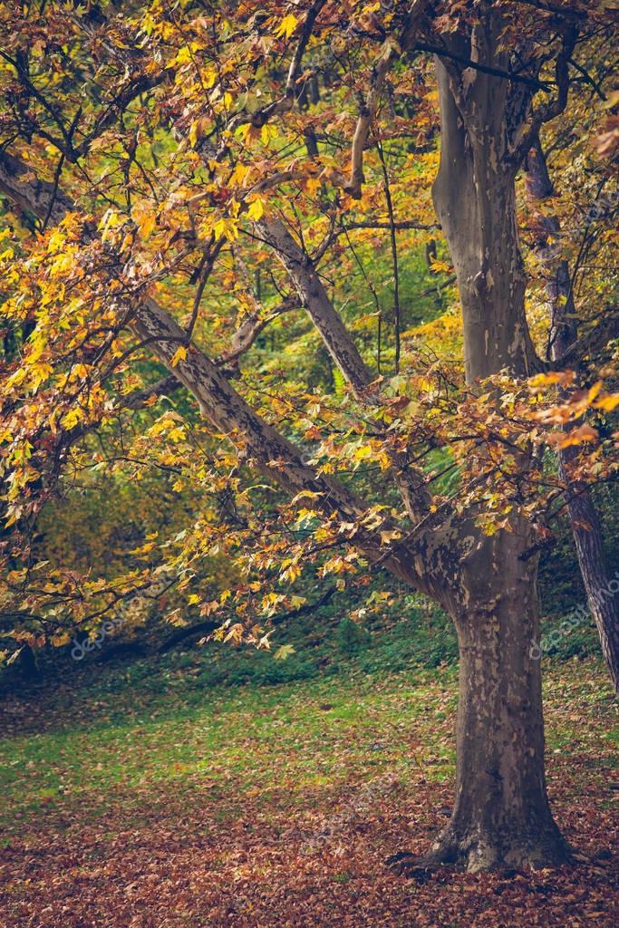 landscape of autumn park