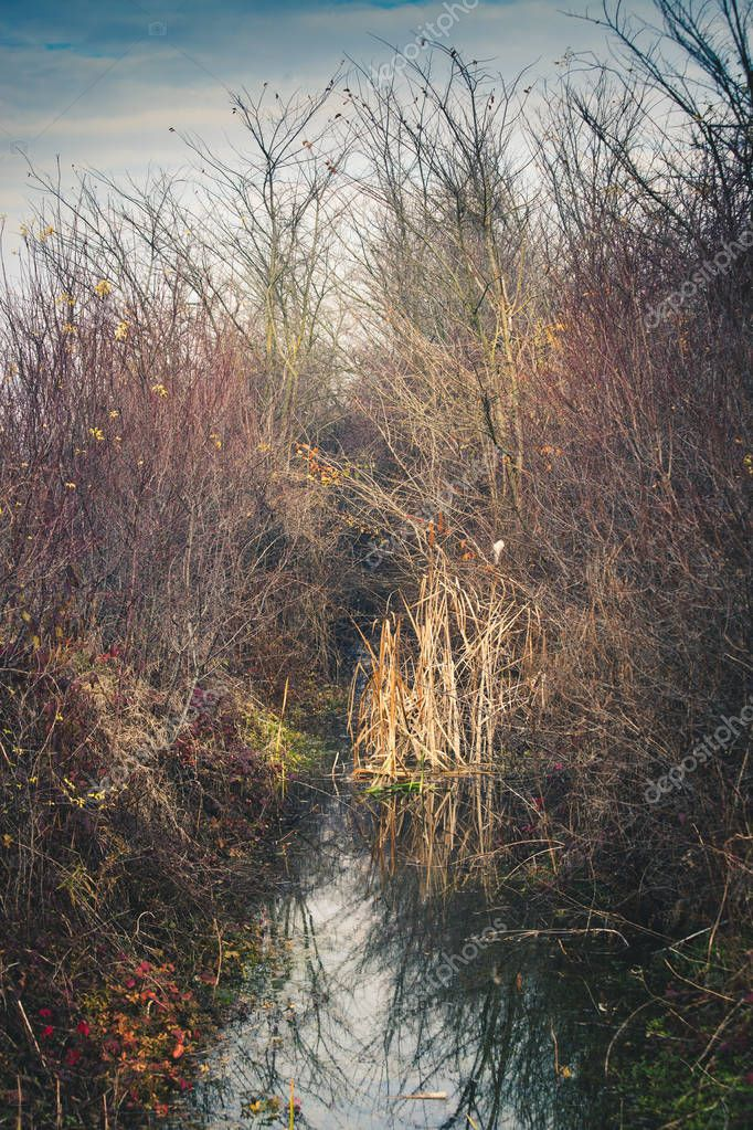 cane and branches in the water channel