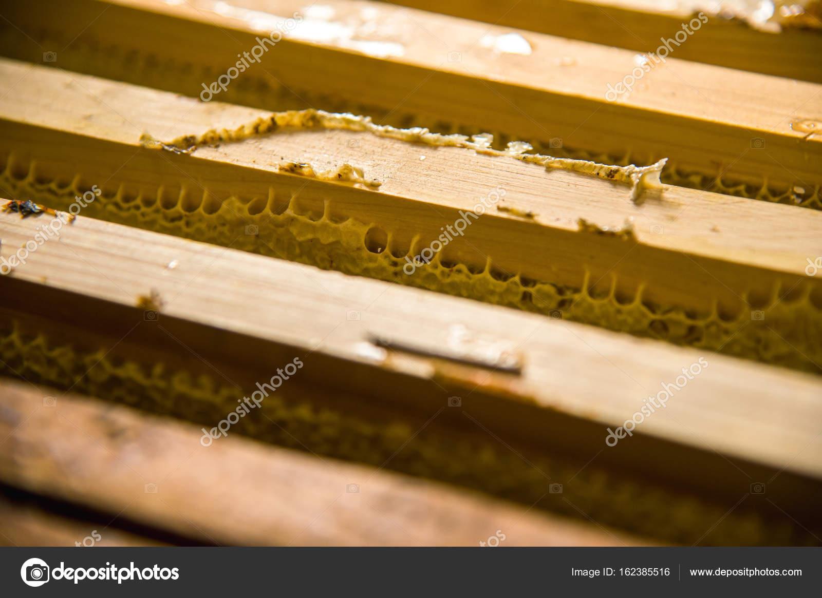 Marcos en el cual es almacenado miel fresco inacabado en panales ...