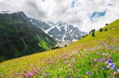 Flowering alpine meadows in the Caucasus