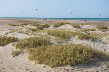 Desert plants on sand dunes with kite surfers at tropical beach