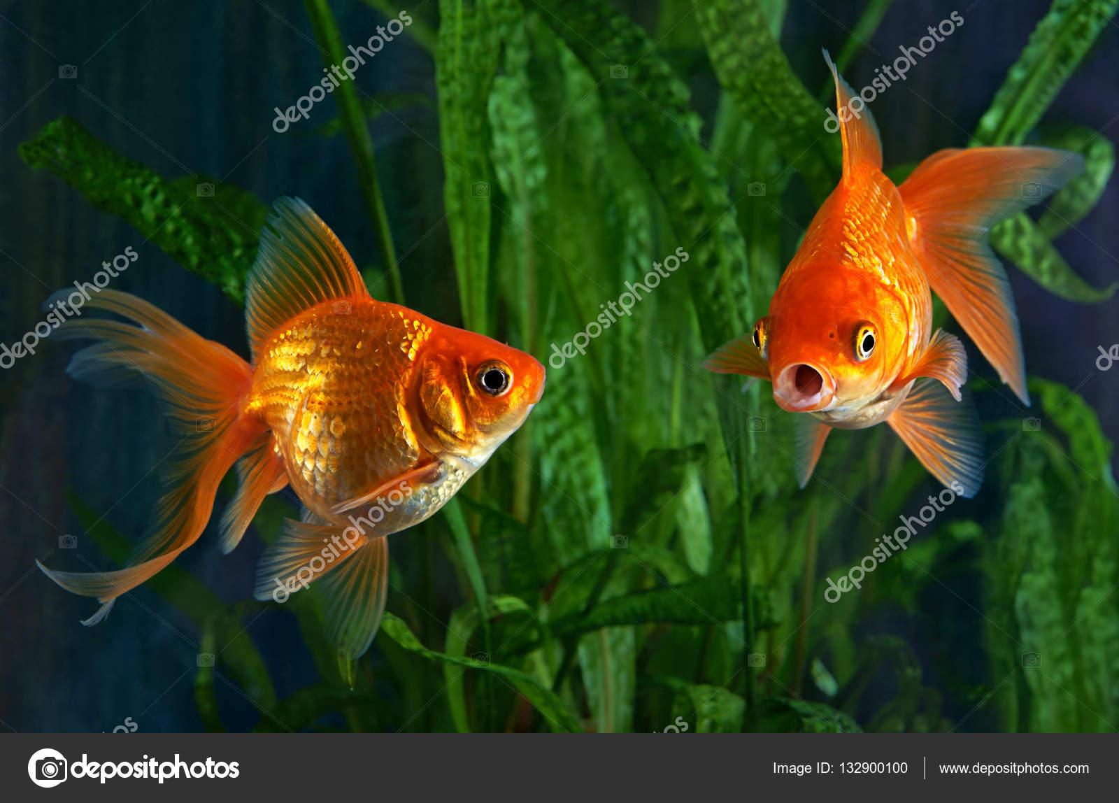 Скачать или распечатать раскраску распечатать скачать рыбку рыбки.