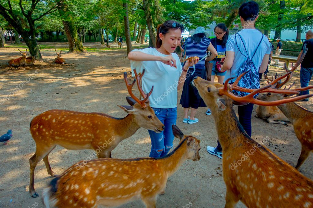 Nara, Japan - July 26, 2017: Unidentified woman wearing a white t-shirt, feeding a wild deer in Nara, Japan. Nara is a major tourism destination in Japan