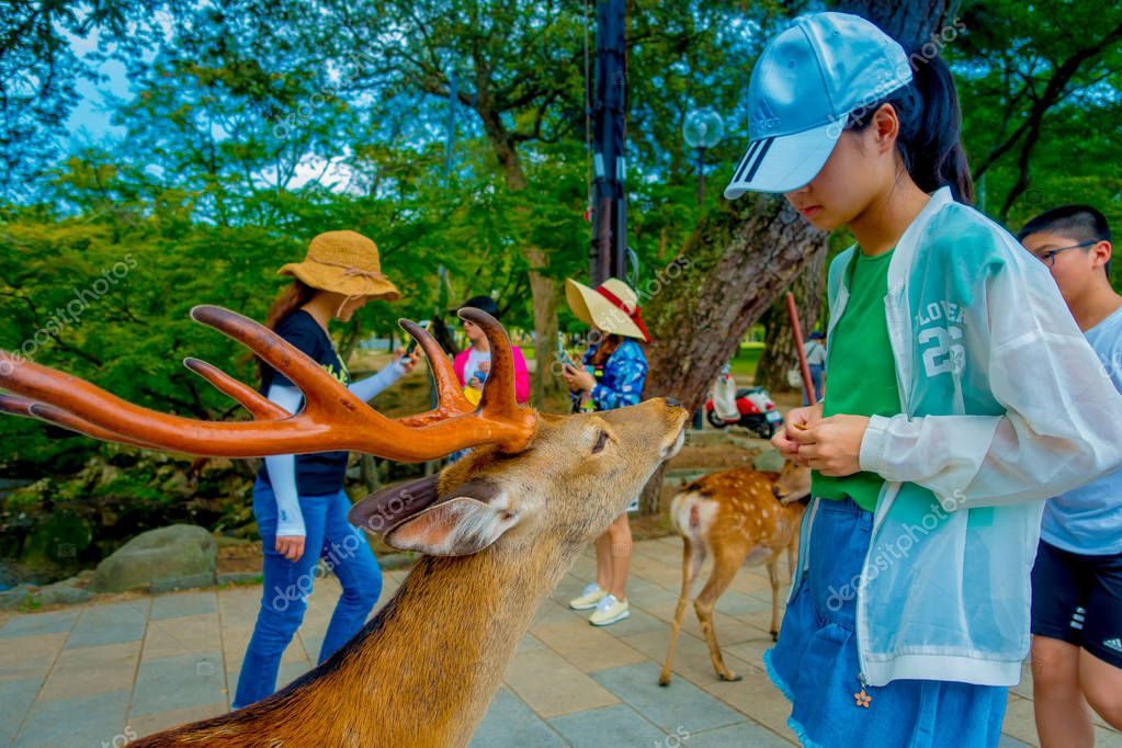Nara, Japan - July 26, 2017: Unidentified woman wearing a hat is feeding a wild deer in Nara, Japan. Nara is a major tourism destination in Japan - former capita city and currently UNESCO World