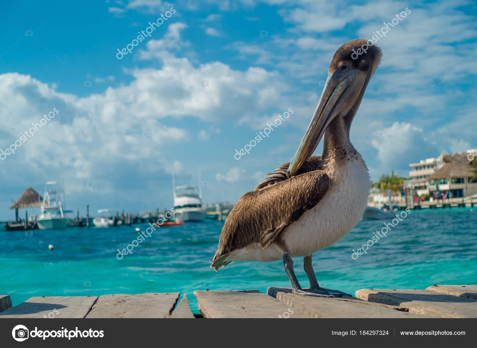 μεγάλο πουλί ισπανόφωνοι