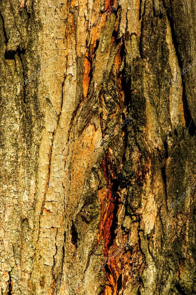 Close up of details of real tree old wooden texture. Wood background with brown structure. Natural forest rustic photo
