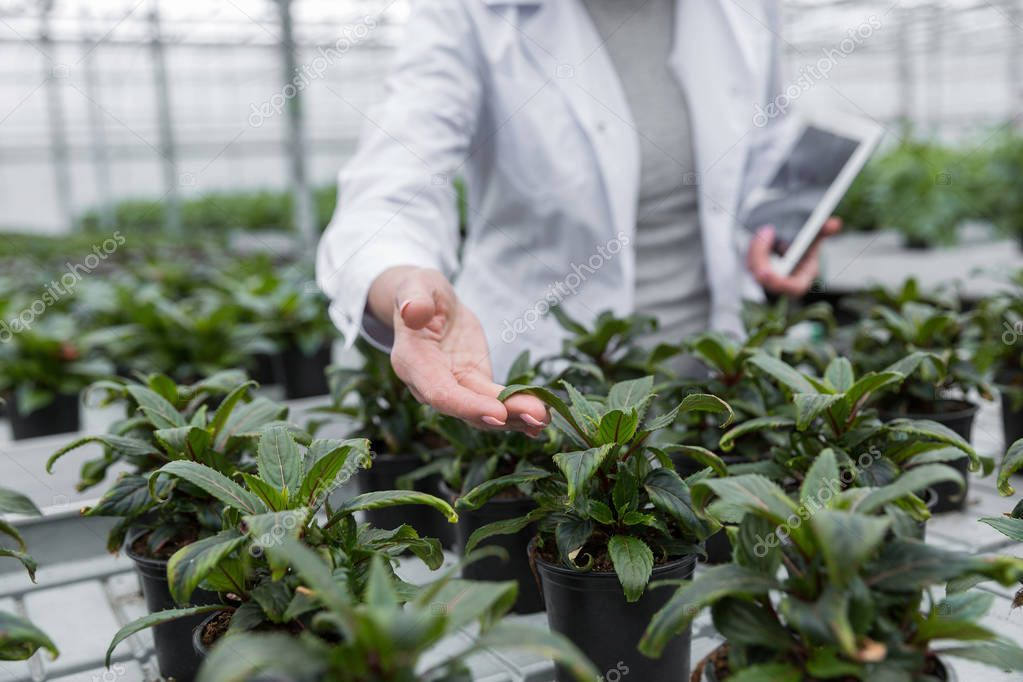Cropped image of mature woman standing in greenhouse