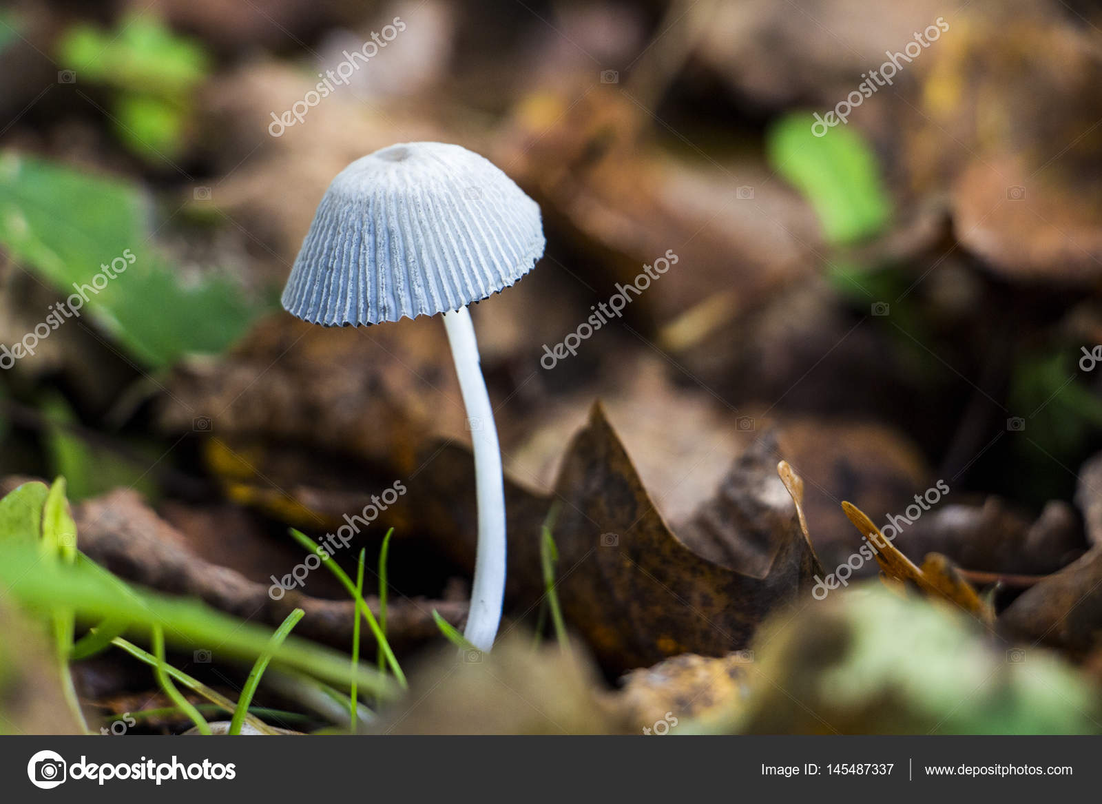 White mushroom in garden — Stock Photo © elaplan #145487337