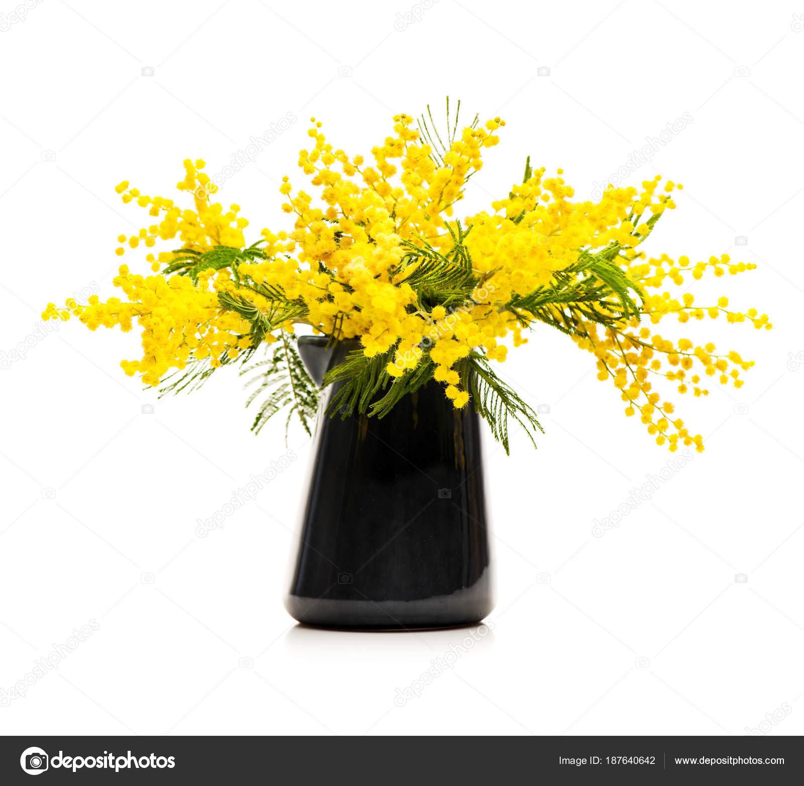 Yellow Flowers Mimosa Vase White Background Stock Photo