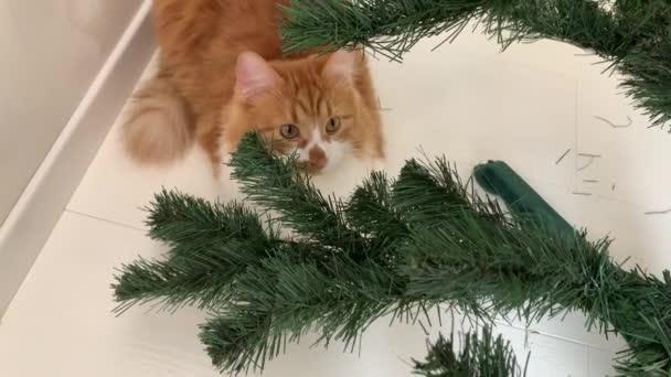 schöne Ingwerkatze und Weihnachtsbaum. er spielt mit einem Weihnachtsbaum, schaut dir in die Augen.