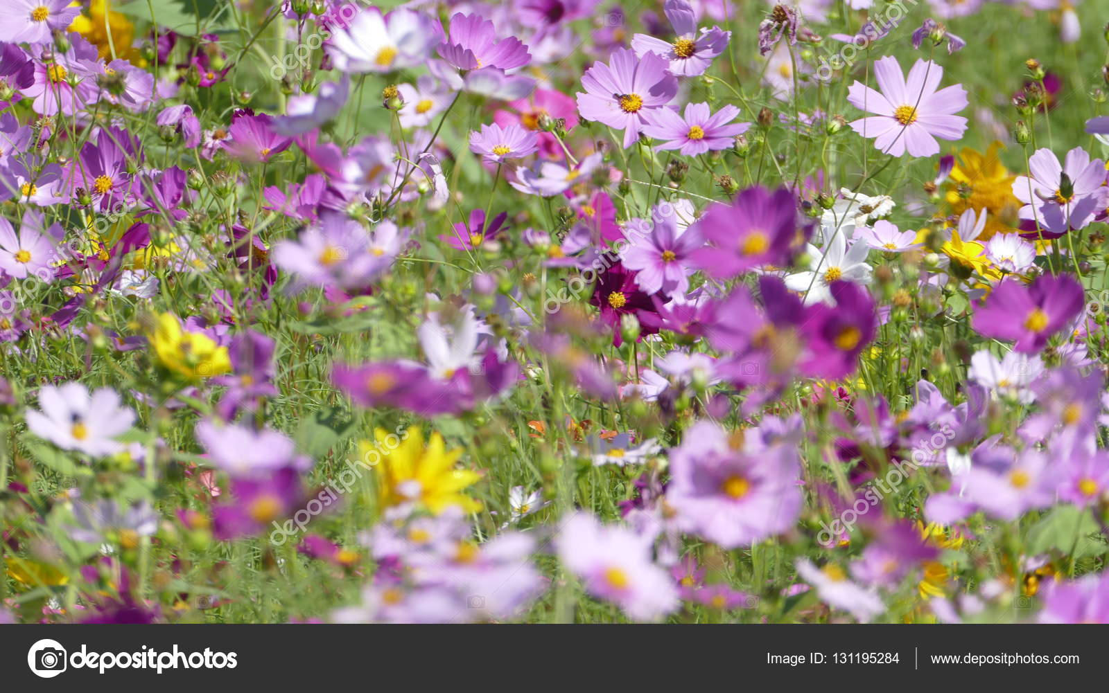 Flower Garden With Very Nice Weather For Background U2014 Stock Photo