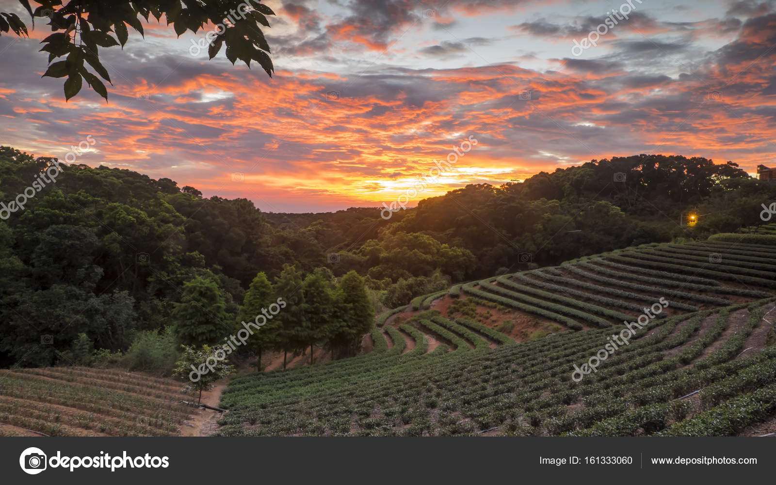 tea garden sunset in the summer time with nice background view ...