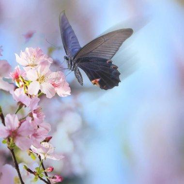 """Картина, постер, плакат, фотообои """"realistic sakura cherry branch with blooming flowers with nice b"""", артикул 164318828"""