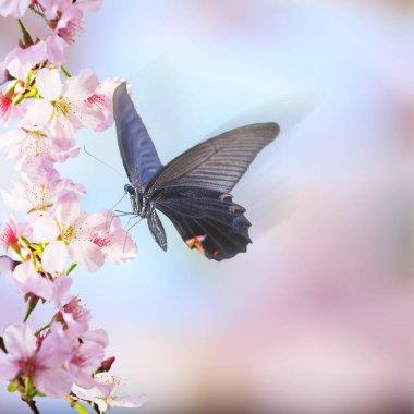 """Картина, постер, плакат, фотообои """"realistic sakura cherry branch with blooming flowers with nice b"""", артикул 164318886"""