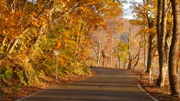 Oirase soutěska krásné řeky druing podzimní sezónu, Japonsko